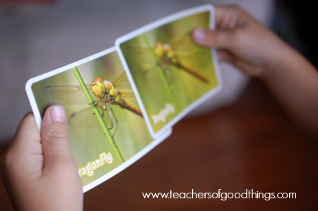 Learning in Motion: Insect Memory Game - Learn about the insect | www.joyinthehome.com
