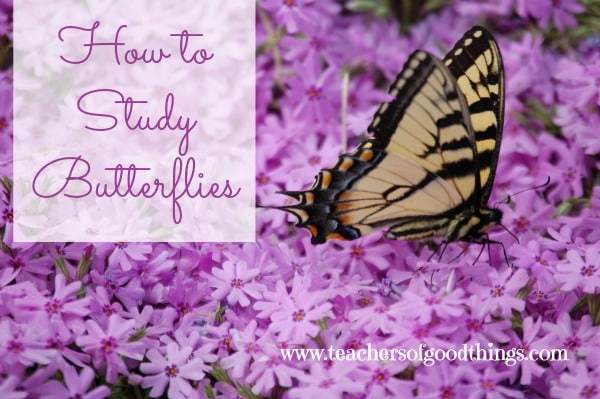 How to Study Butterflies