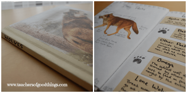 Zoology Journaling | www.joyinthehome.com